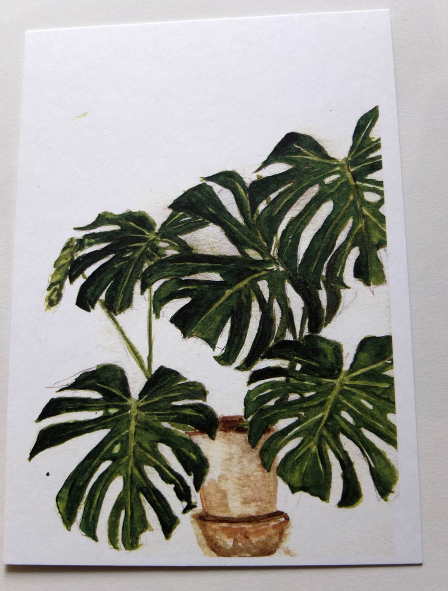 postkaartje monstera