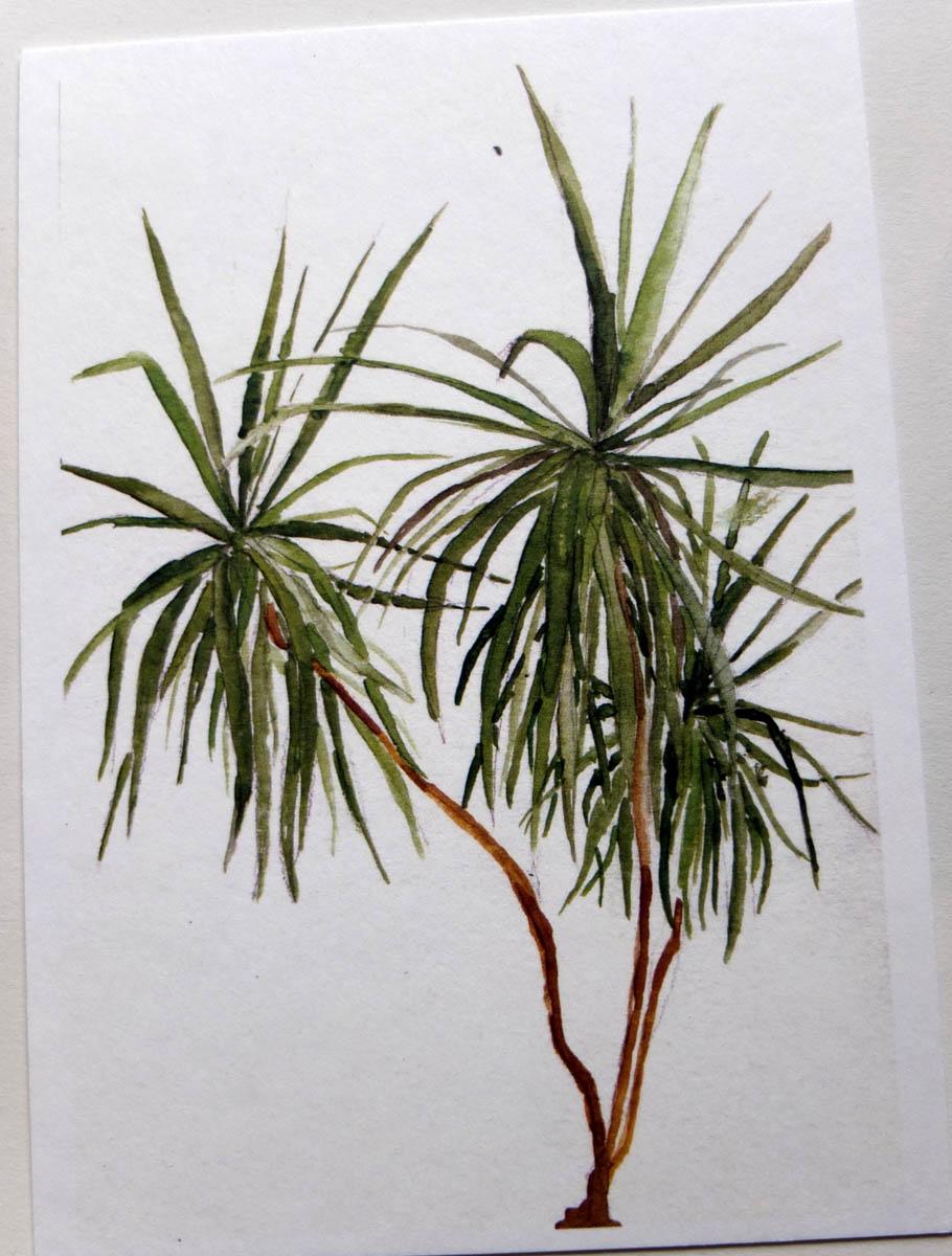 postkaart drakenboom