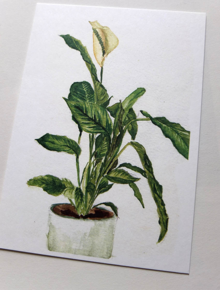 postkaartje lepelplant